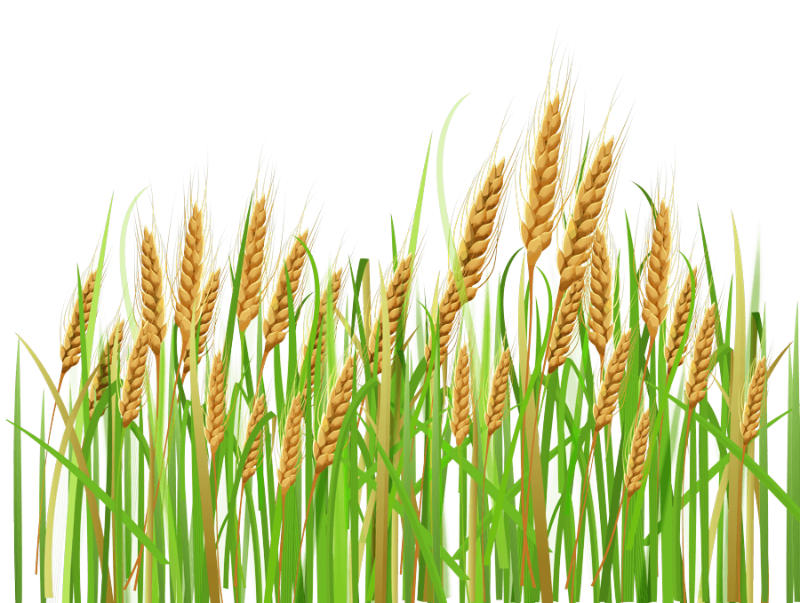 Wheat, Weeds and Ministry